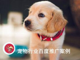 百度平均線索成本僅8元,寵物醫院推廣必須把握本地需求