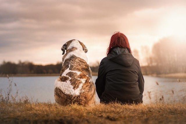分析宠物用户的特征