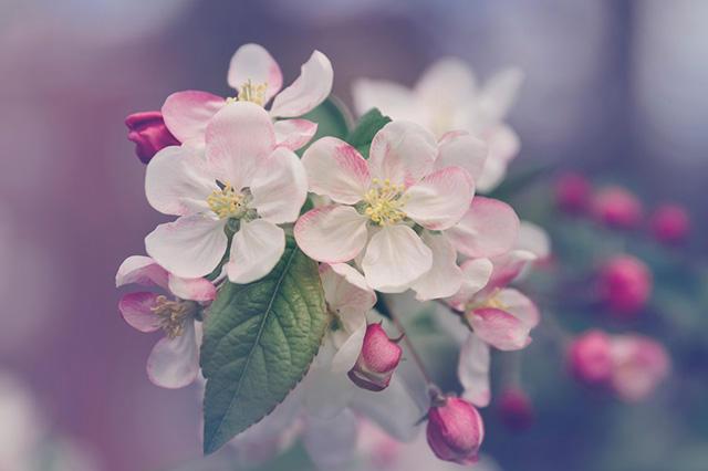园艺花卉例子