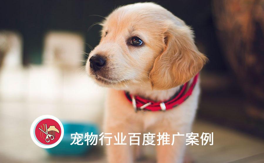 百度宠物医疗推广