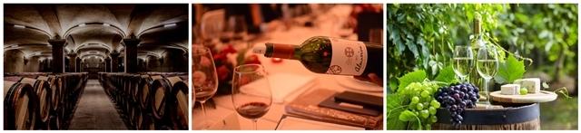 红酒酒庄展示