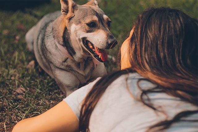 养宠物的人群占比高